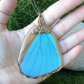 Blue Morpho Wing Necklace