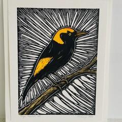 Australian Birds - Regent Bowerbird 4/5 - Linoprint and watercolour