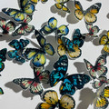 Edible Wafer Paper Butterflies - Pack of 24 - PRE-CUT - WP012