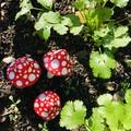 Garden mushrooms 🍄 set of 3