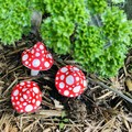 Garden mushrooms 🍄 set of 3