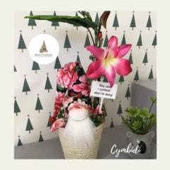 Nisse   Gnome - Cymbidi - Orchid   H:29cm