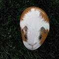 """Henry"" the guinea pig"