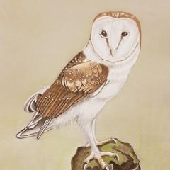 Affordable art print original print owl portrait wall decor