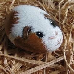 """Guinea Pig Rock """"Kevin"""""""