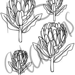 protea pattern