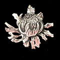 Waratah Brooch- solid sterling silver, Australian souvenir, Aussie gift