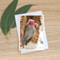 Galahs, together forever - Photographic Card #25