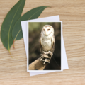 Barn Owl - Photographic Card #34