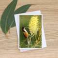 Eastern Spinebill and Moonlight - Photographic Card #26
