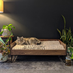 Edradour Wood Mid-Century Pet Bed