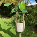 Avocado macrame plant hanger