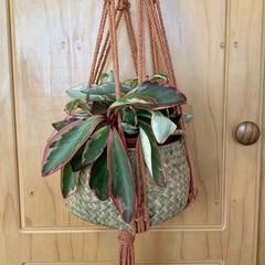 Terracotta macrame plant hanger