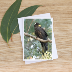 Female Yellow-Tailed Black Cockatoo -  Photographic Card #28