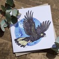 Set of 10 - Large Watercolour Greeting Cards - Birds of Australia FREE SHIPPING