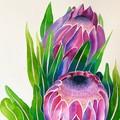 Protea passion