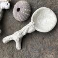 Coral detail spoon