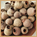 Australian Gumnuts for craft