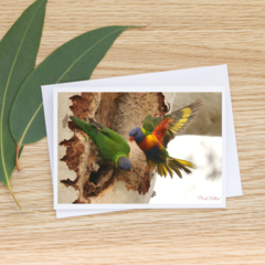 Rainbow Lorikeets at a Hollow - Photographic Card #31