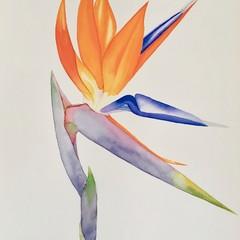 Bird of Paradise original watercolour painting