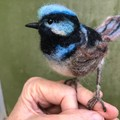 Needle felted Superb Fairy Wren, Australian animal, felt bird sculpture