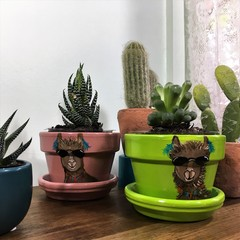 Llama pots - 2 Sizes Available - Choice in colour