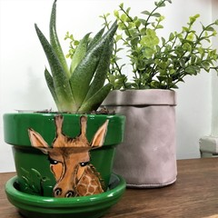 Giraffe Pots - Available in 2 sizes - choice of colour