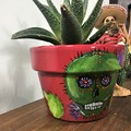 Creepy Cactus Skull Pots - 2 sizes available - Choice of colour pots