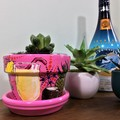 Plant pots - Pina Colada Pots