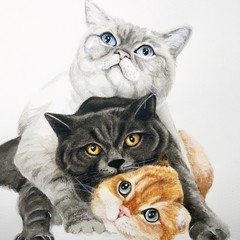 Custom cat portraits in watercolour. Gift for cat owner. Gifts for cat lovers