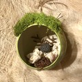 """""""Rainforest:"""" Diorama - Bauble - Nature - Green - Christmas - Forest - Lotus"""