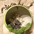 """Nelumbo"" Diorama - Bauble - Nature - Green - Christmas - Forest - Lotus"