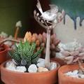 Soup Spoon Fairy Wren Garden Decoration 3