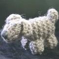 West Highland or Cairn Terrier Puppy Dog