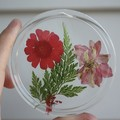 Resin pressed flower coasters