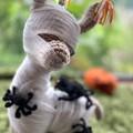 Halloween Llama Halloween Decoration Handmade Toy - Llama Mummy