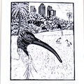 Australian White Ibis Lino Cut Print / Australian Bird / Original Artwork