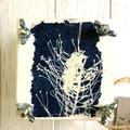 Handmade Mini Flower Press with Botanical Cyanotype Artwork of  Grevillea Flower
