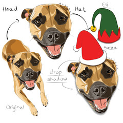 HEAD FEATURE - rework on existing Herman pet Illustration | + HATS / WREATH