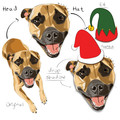 HEAD FEATURE - rework on existing Herman pet Illustration | + HATS / WREATH
