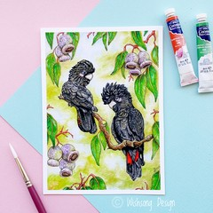 "Medium art print ""The Meeting Place"" Red Tailed Black cockatoo print"