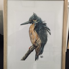 Kingfisher Colour Pencil Drawing Framed