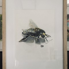 Bee Colour Pencil Drawing Framed