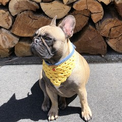Yellow crocheted bandana with a blue trim and either a small ❤️ or 🌼 button.
