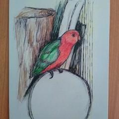 King Parrot #1