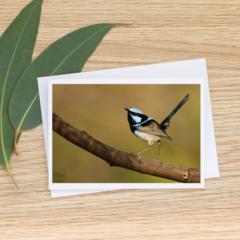 Male Superb Fairy-Wren - Photographic Card #38