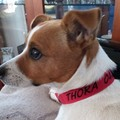 Personalised Pet Collars made to order