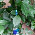 Blue Crystal Moon Sun-catcher