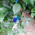 Blue Crystal Moon Sun-catcher