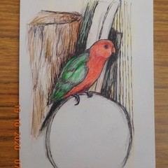 King Parrot greeting card pack x 5
